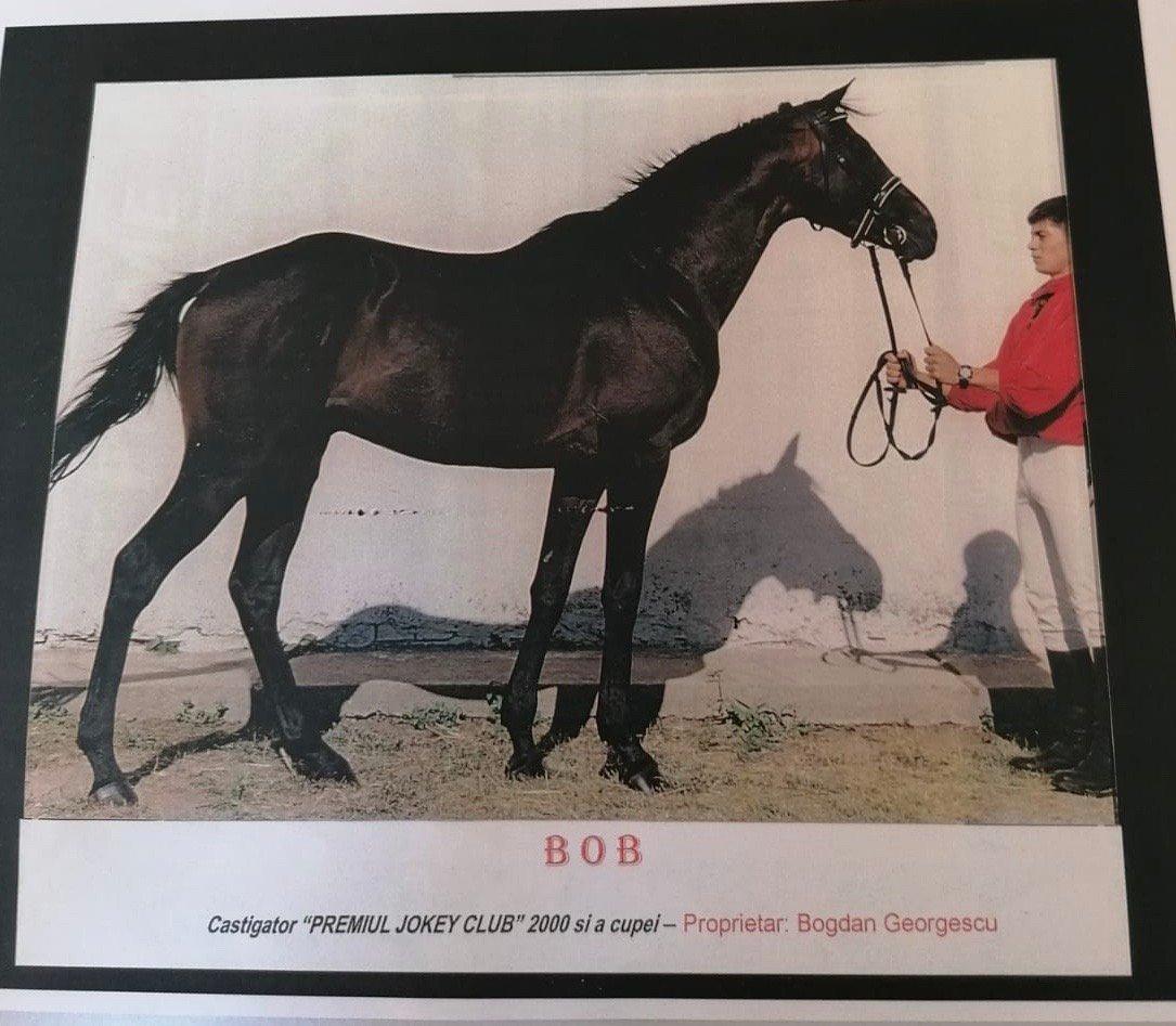 calul BOB