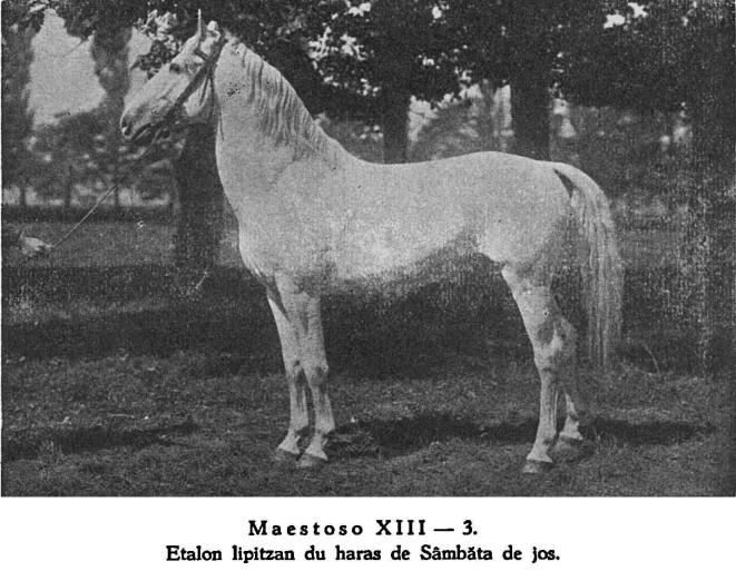 Maestoso XIII-3