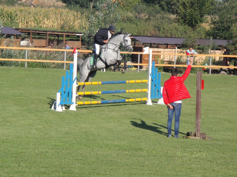 MD Horses Arad