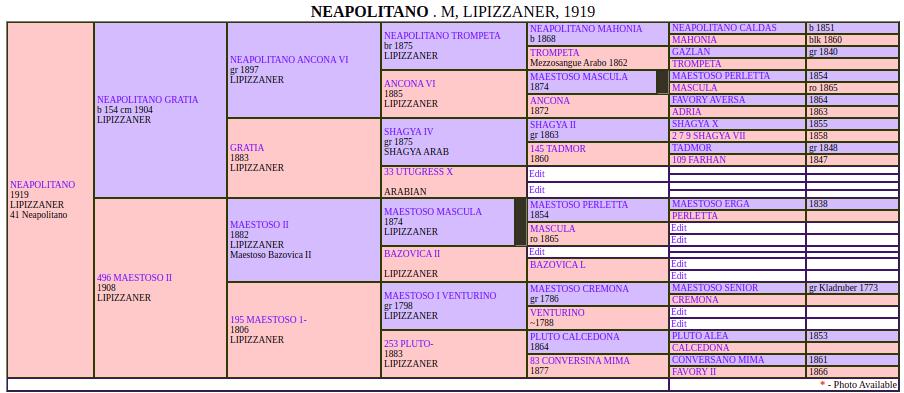 neapolitano pedigree2