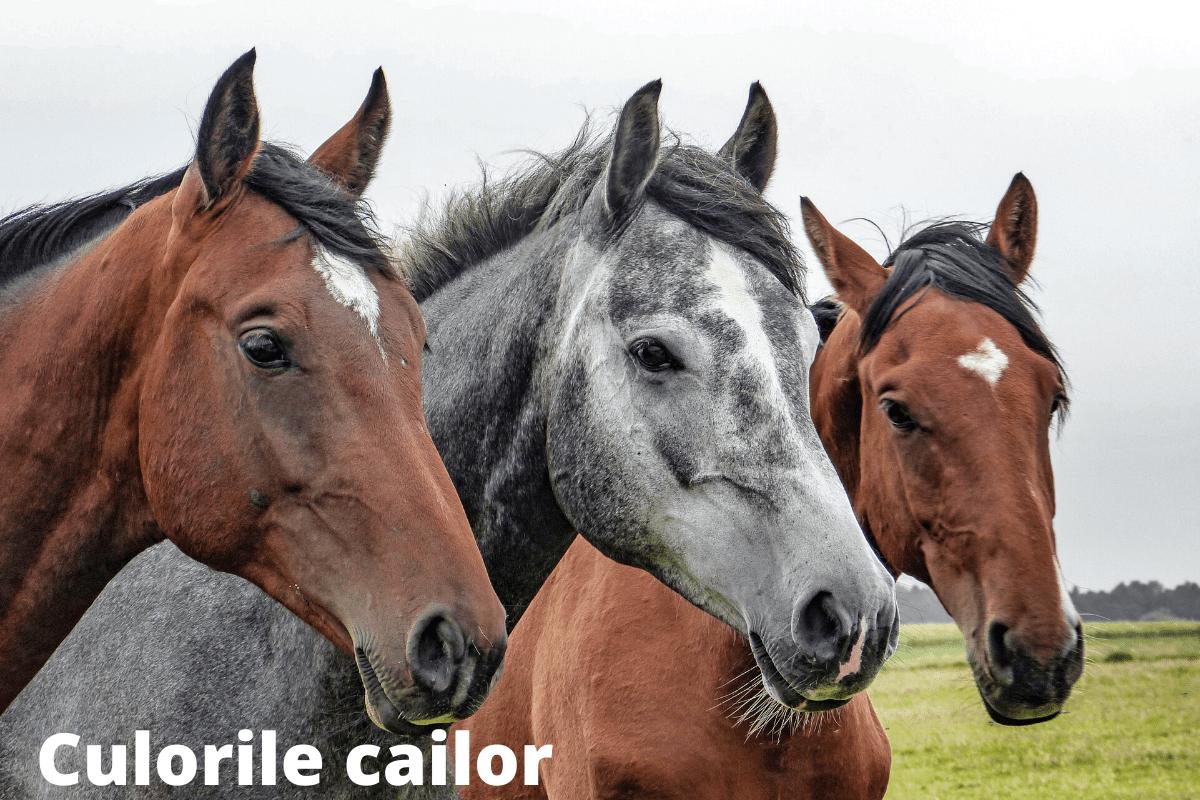Culorile cailor